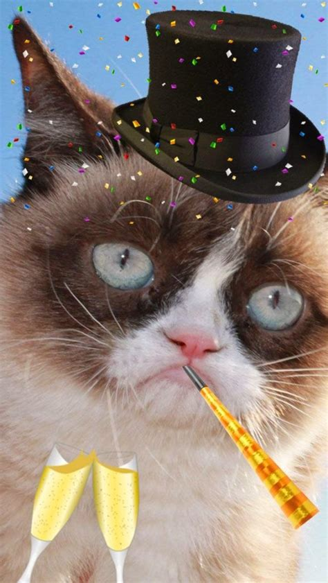 adorable cats excited to celebrate new years cat fancast