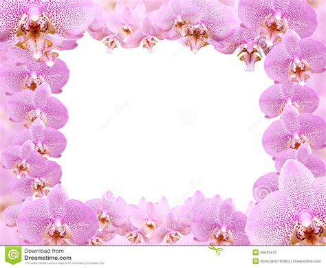 orchideen gestell orchid frame stock image image of valentines flower