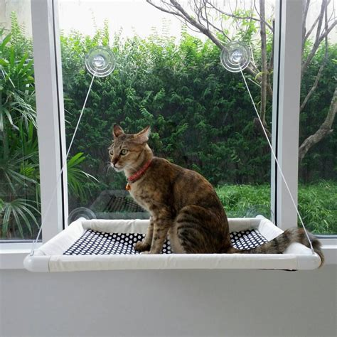 window cat bed kitchen dining