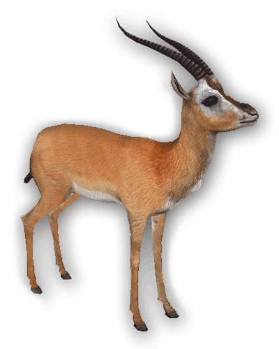 imagenes de jirafas animados selva gifs animados animales selva leones jirafas cebras