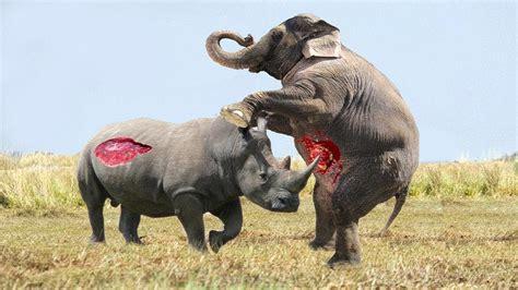 top  ataques locos de rinocerontes captados en camaras youtube