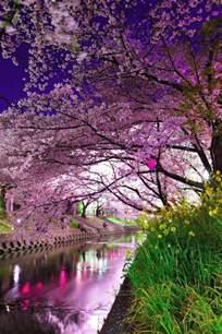 Beau Cerisier A Fleurs Pleureur #5: cerisier-japonais-au-dessus-du-canal.jpg