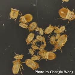bed bugs home lawn garden