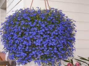 Beautiful Plante Pour Mur Vegetal Interieur #11: Verveine-retombante-plante-tombante.jpg