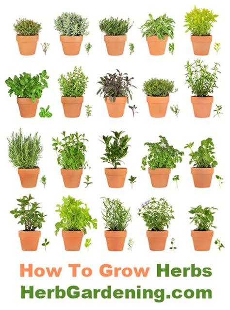 planting your own herb garden learn how to grow your own herb garden indoors or out