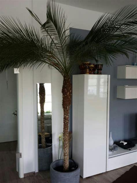 wohnzimmer palme wohnzimmer pflanzen palme raum und m 246 beldesign inspiration
