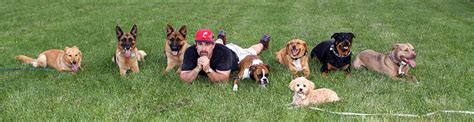 already trained therapy dogs for sale protection obedience therapy cleveland ohio