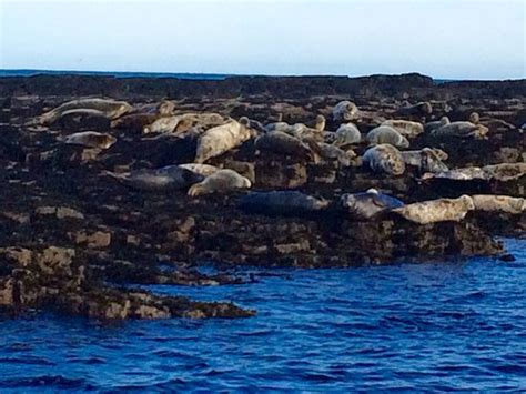 farne islands boat trips prices photo1 jpg picture of serenity farne island boat tours