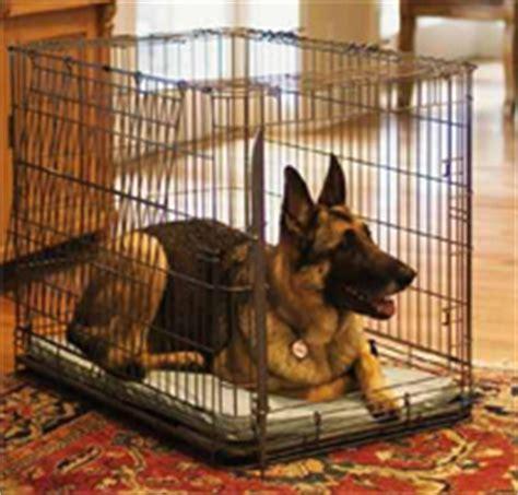 Dog Training At Home Desember 2016