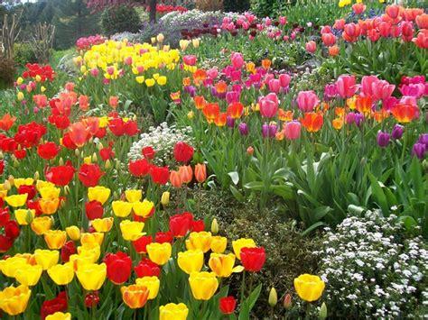 giardini privati piccoli piccoli giardini privati crea giardino allestire un