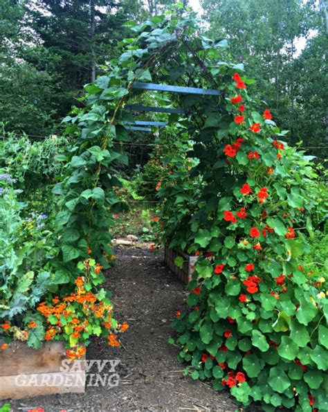 vertical garden vegetables vertical vegetable gardening pole bean tunnels