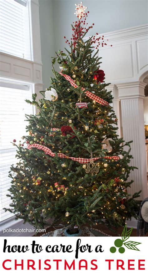 tips and tricks for caring for a fresh christmas tree