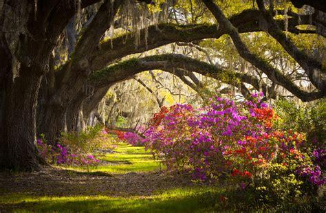 charleston sc magnolia plantation full hd fond d 233 cran and