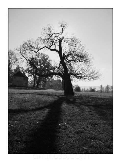 tim burton s tree landscape rural photos laurent k