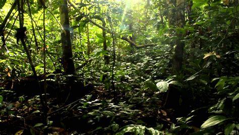 por una gentil floresta 191 la marginal de la selva peri 243 dico el cesino la voz del co colombiano
