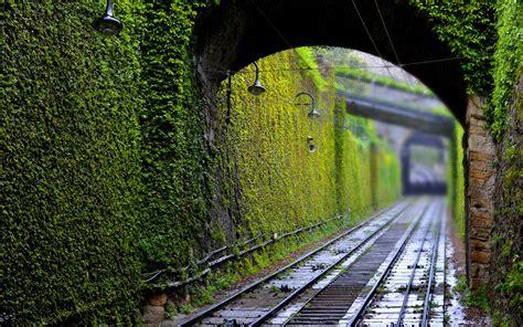 beautiful lush greenery hd wallpapers wonderwordz