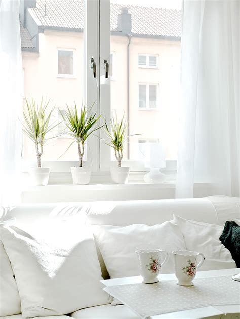 Window Ledge Plants White Interior Cup Whites Best Cups