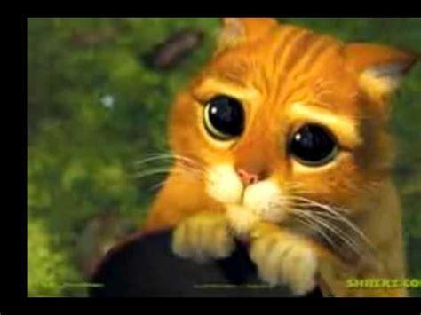 imagenes de cumpleaños bonitos gatos bonitos vol 2 youtube