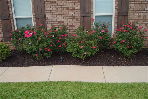 Bushes For Landscaping Lawn Shrubs Images