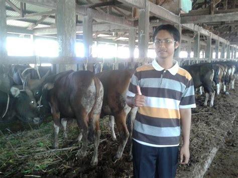 Bibit Bebek Raja 301 moved permanently