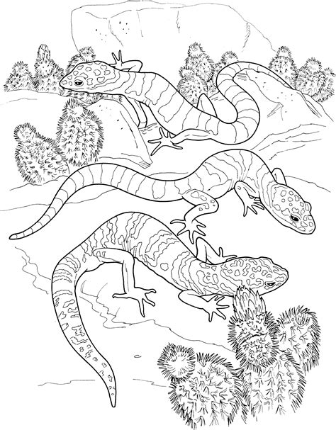 lizard coloring pages for adults colour by number reptiles baby lisard colouring pages