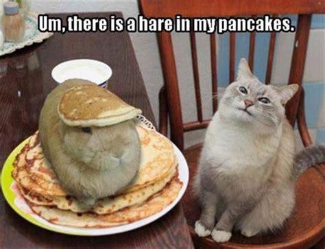 Pancake Meme - 1000 images about cats on pinterest cat memes grumpy
