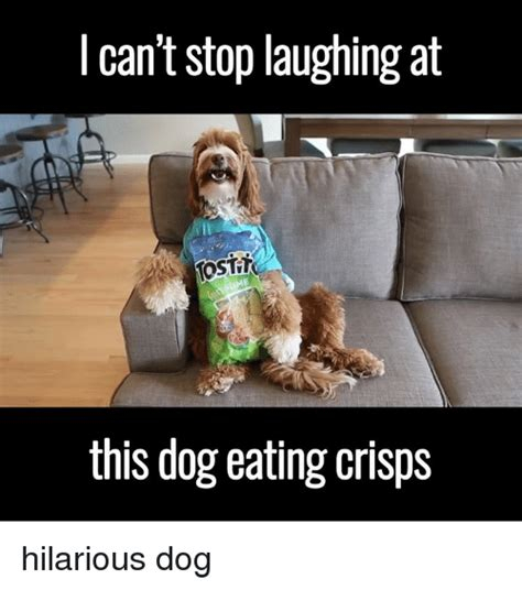 T Dog Meme - 25 best memes about dog eating dog eating memes