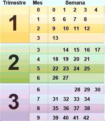 cuantos meses te pagan de embarazo calendario de conversi 243 n de semanas a meses en el embarazo