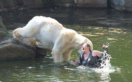 Teacher Who Survived Polar Bear Mauling At Zoo Was Depressed Over Job Telegraph