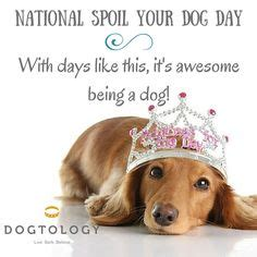 national spoil your day if i was granted one wish i would wish that my best friend could live forever