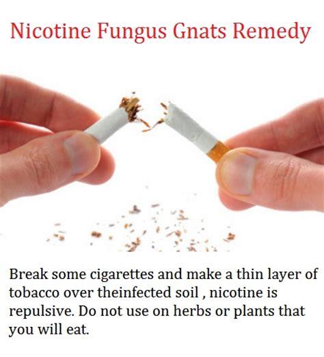 getting rid of fungus gnats