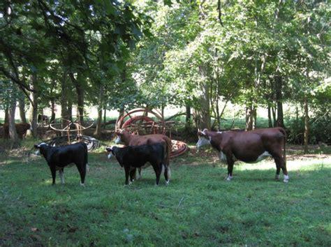 backyard beef circle e backyard beef website