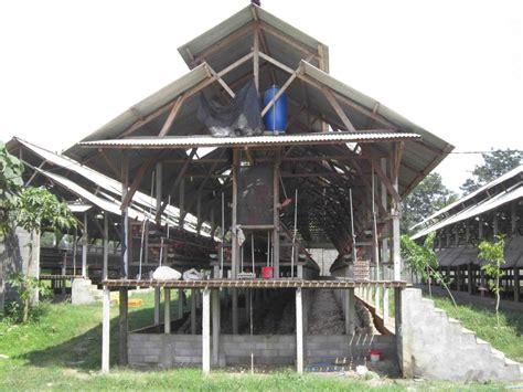 Bibit Ayam Petelur Di Bali membuat kandang ayam petelur sederhana kandang ayam petelur