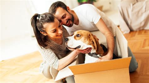 moving to hawaii with dogs moving pets to hawaii frequently asked questions faq hawaii real estate market