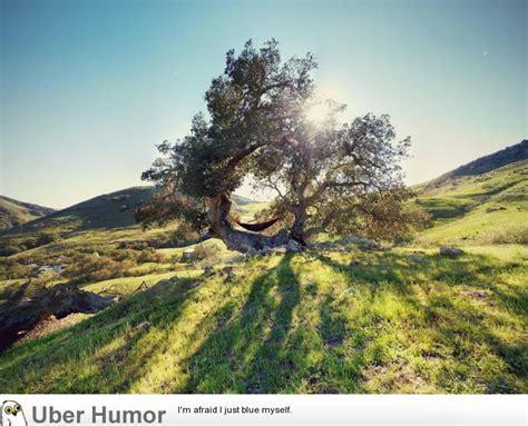 serenity swing san luis obispo hung my hammock in this amazing tree yesterday funny