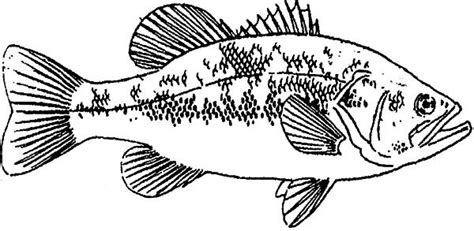 coloring pages bass fish fishing target bass fish coloring pages best place to color
