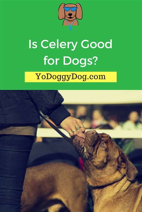 is celery for dogs 1044 best images about friends cats and dogs gifts tips pet designs for