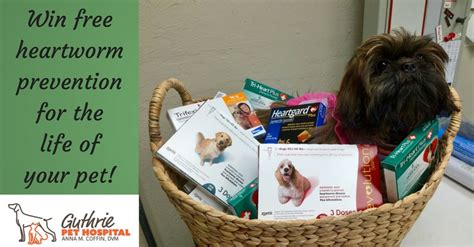 heartworm pills for dogs win a lifetime supply of heartworm medicine for your ask dr guthrie pet