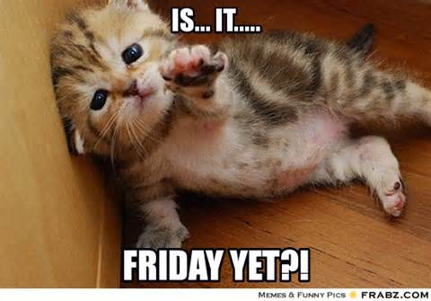 Its friday funny animals memes