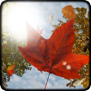 google images fall leaves falling leaves free wallpaper android apps on google play
