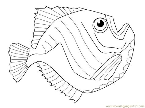 how to draw slippery fish