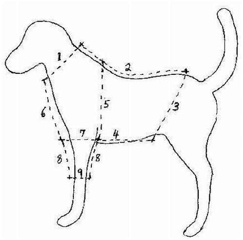 free pattern for large dog coat best 25 dog clothes patterns ideas on pinterest