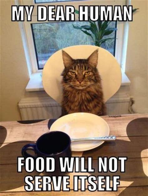 Funny Human Memes - funny cat my dear human