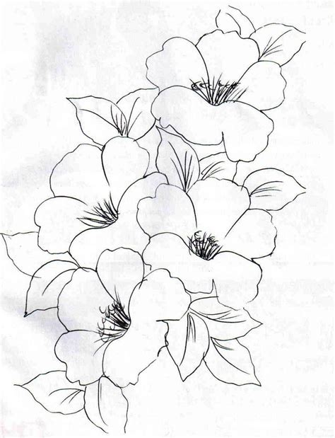 coloring page of dogwood flowers dogwood flower sketch drawings sketch coloring page