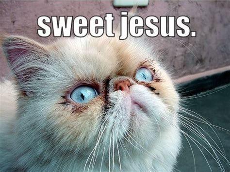 Jesus Cat Meme - calm down sloth virvblog