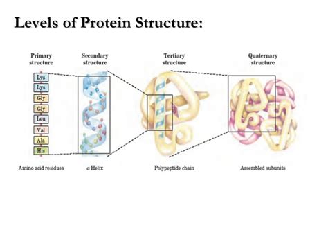 3 protein structure lecture 2 3 protein chemistry