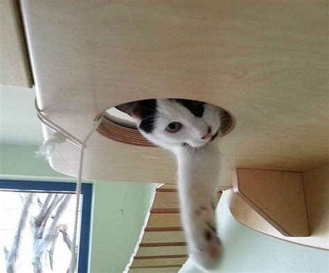 cat wall furniture wall mounted cat playground furniture best free home