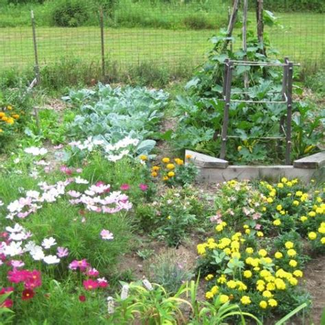 Starting A Backyard Nursery by Organic Gardening 101 How To Start A Garden And Keep It