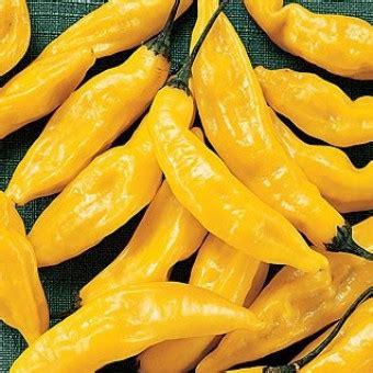 Cabe Kuning Jumbo 10 Biji bibit cabe lemon drop