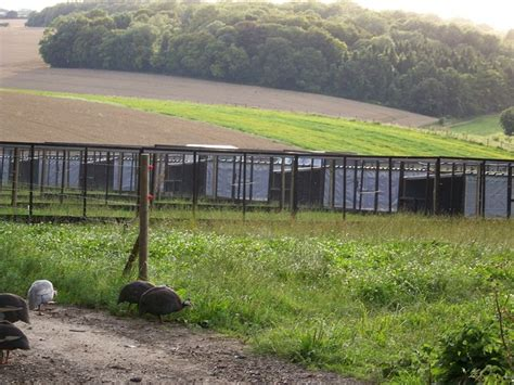 Pheasant Rearing Sheds by Pheasant Rearing Pens Near Odstock 169 Maigheach Gheal
